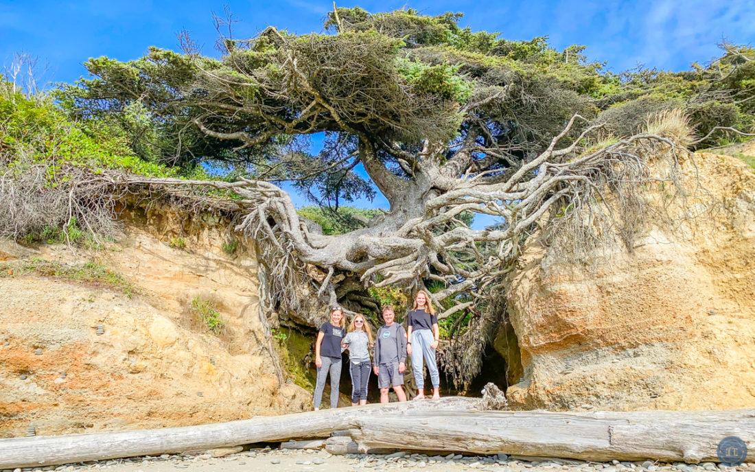 tree of life at kalaloch beach