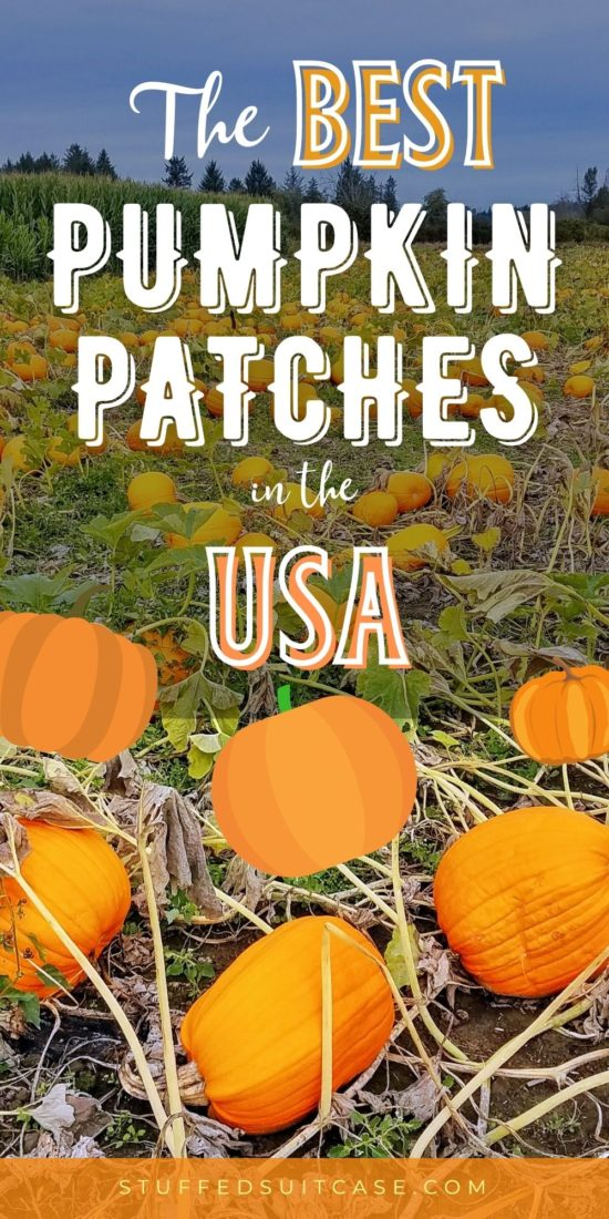 pumpkin patch field with text