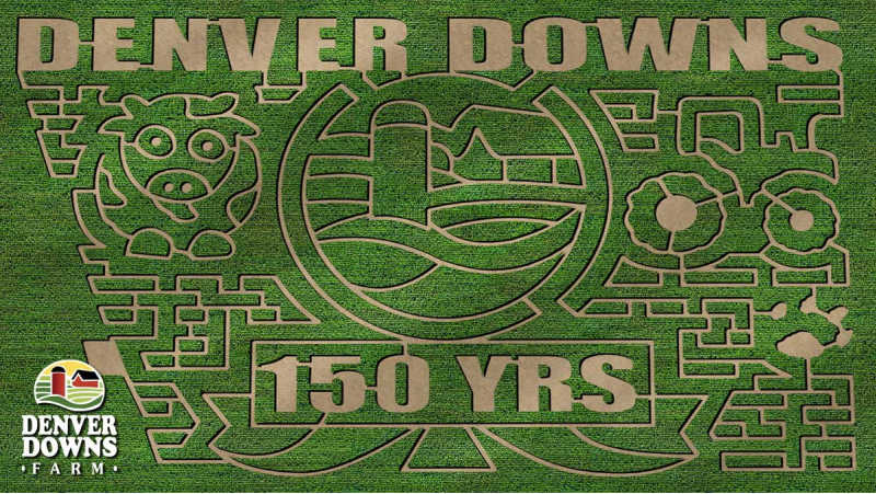 Denver Downs corn maze