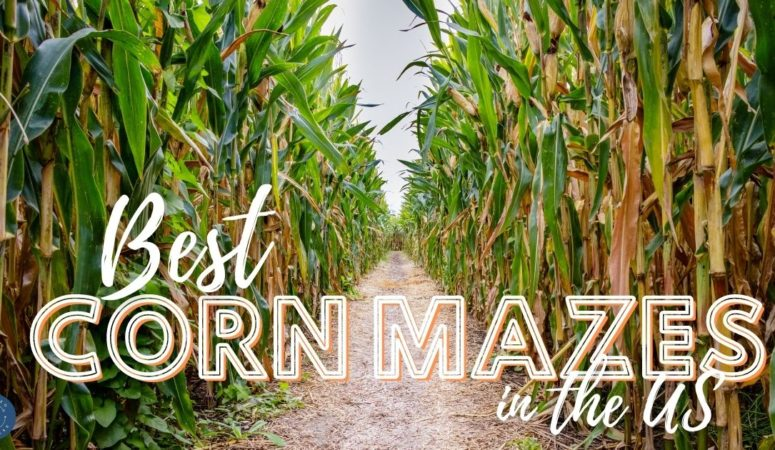 corn mazes in the usa